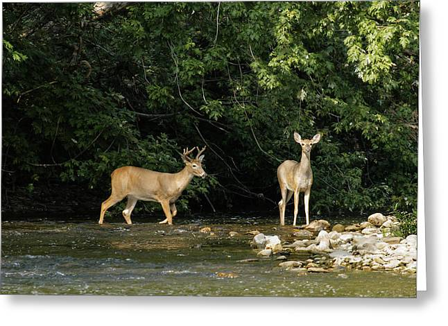 Stream Crossing Greeting Card by David Lester