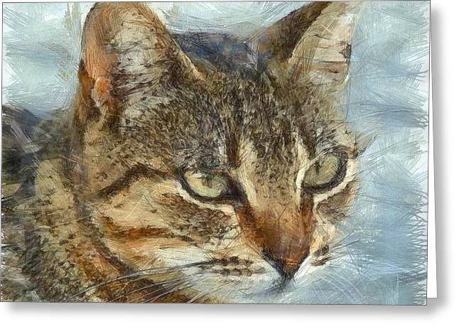 Stunning Tabby Cat Close Up Portrait Greeting Card by Tracey Harrington-Simpson