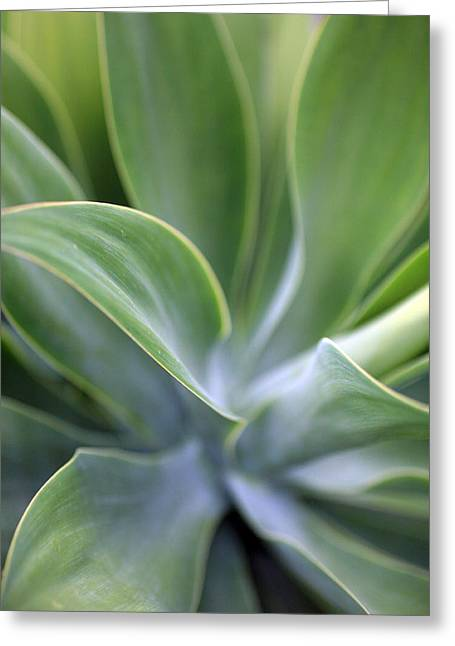Succulent Curves Greeting Card by Mike Reid