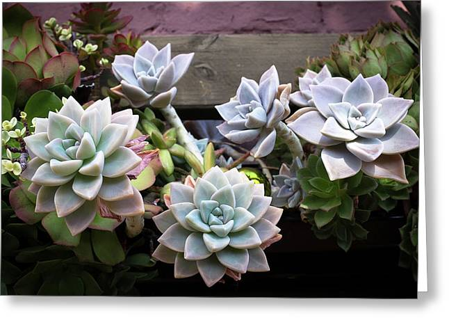 Succulents Greeting Card by Catherine Lau