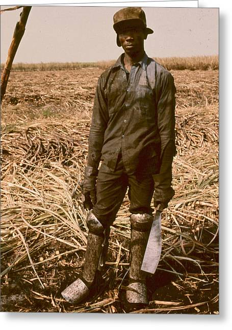 Sugar Cane Cutter Greeting Card