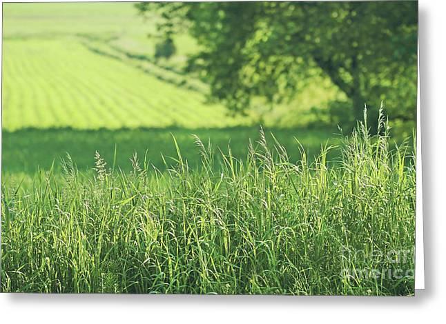 Summer Fields Of Green Greeting Card by Sandra Cunningham