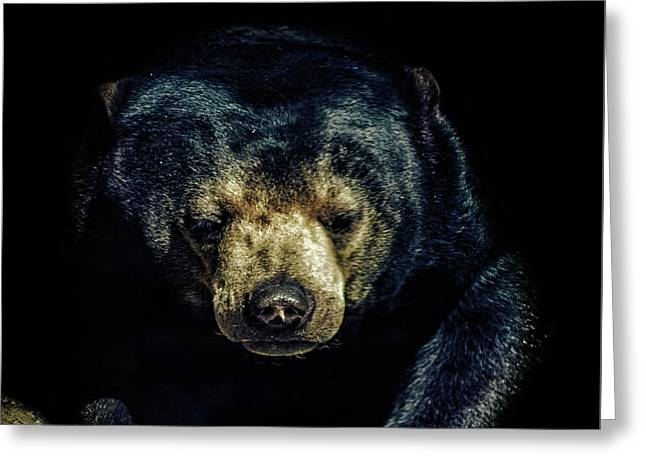 Sun Bear Greeting Card by Martin Newman