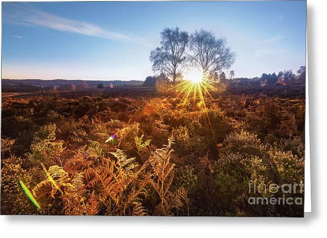 Sun Greeting Card by Svetlana Sewell