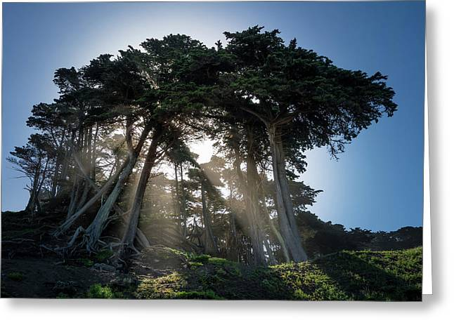 Sunbeams From Large Pine Or Fir Trees On Coast Of San Francisco  Greeting Card by Steven Heap