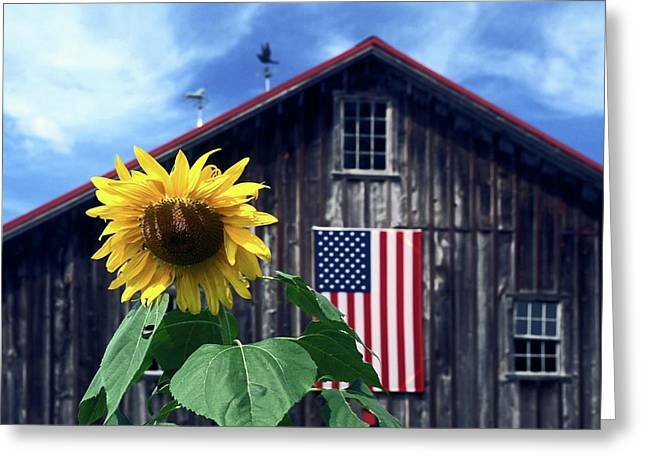 Sunflower By Barn Greeting Card by Sally Weigand