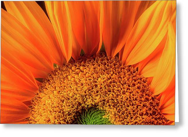 Sunflower Detail Greeting Card