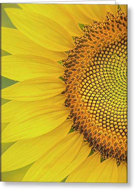 Sunflower Petals Greeting Card