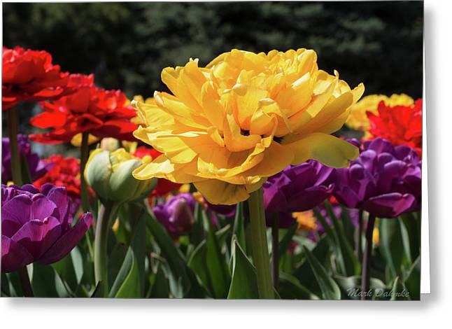Sunken Gardens Greeting Card
