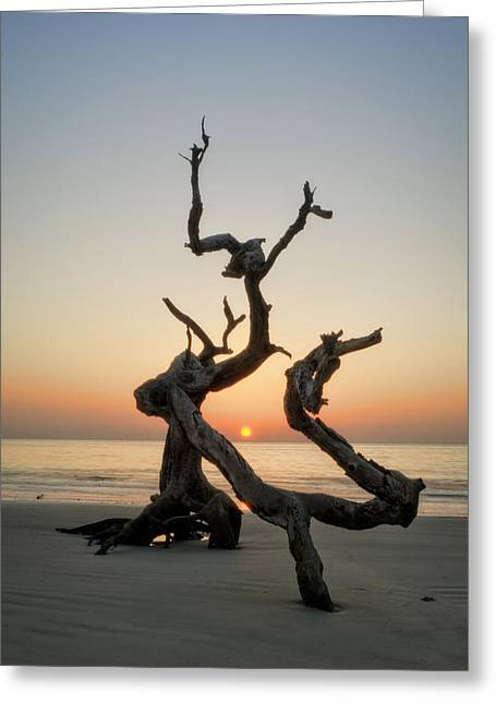 Sunrise On Driftwood Greeting Card