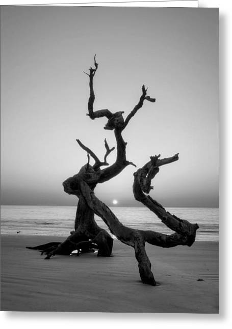 Sunrise On Driftwood In Black And White Greeting Card