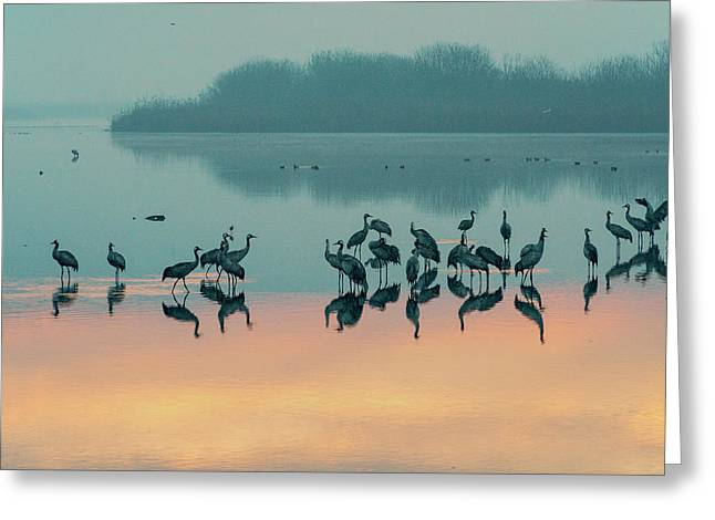 Sunrise Over The Hula Valley Greeting Card