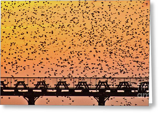 Sunset And Starlings In Aberystwyth Wales Greeting Card