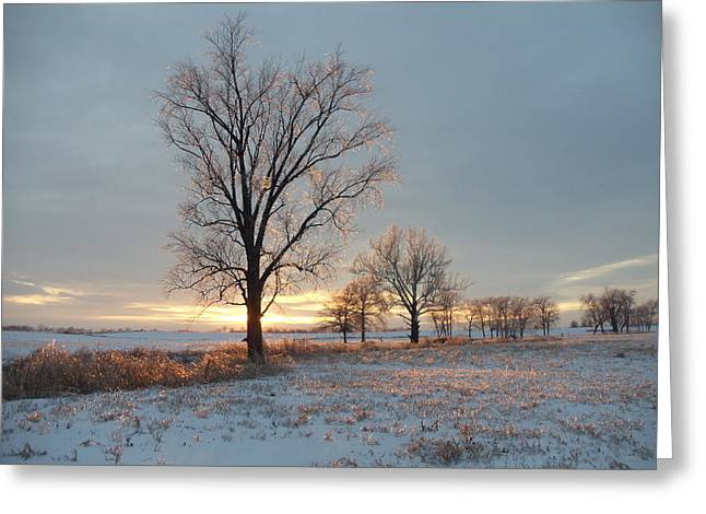 Sunset Over Icy Field Greeting Card by David Junod