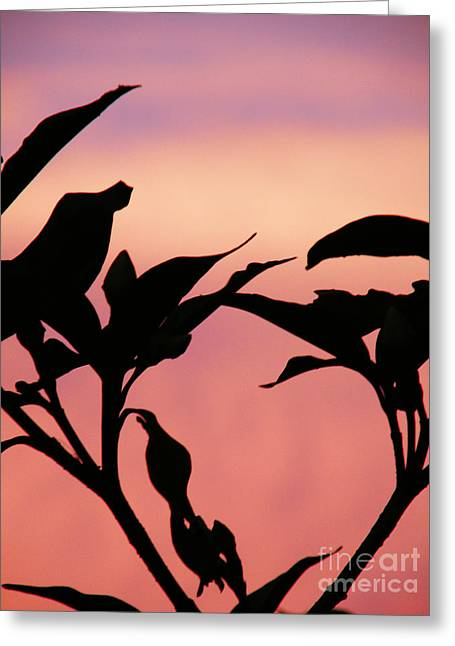 Sunset Silhouette Greeting Card by Rose  Hill