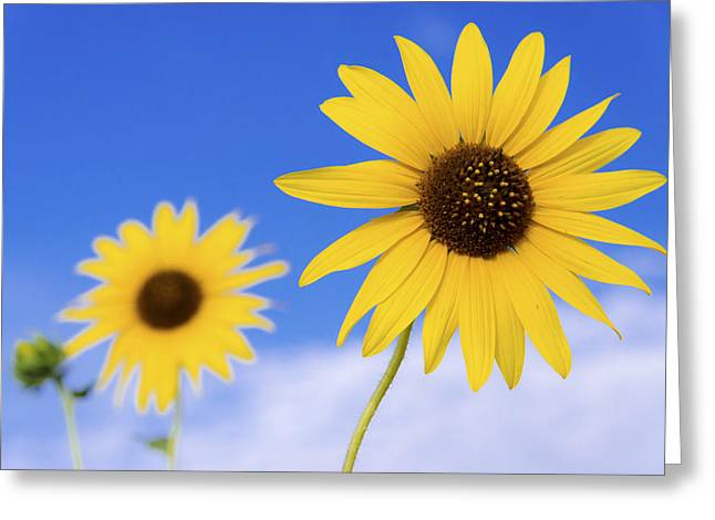 Sunshine Greeting Card by Chad Dutson