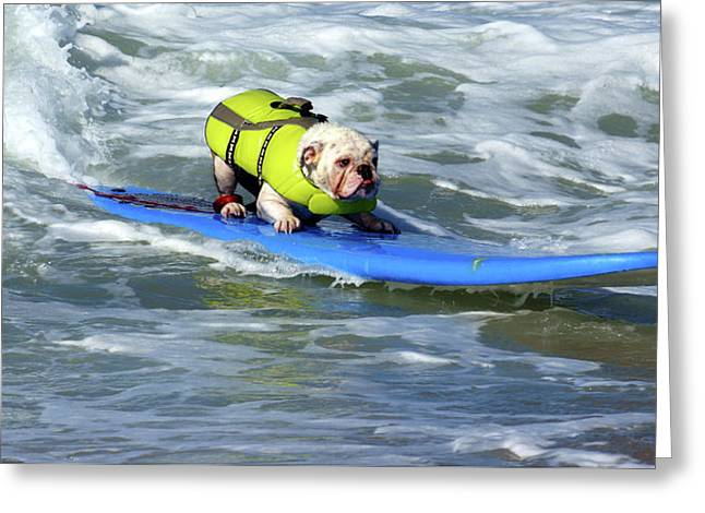 Greeting Card featuring the photograph Surfing Dog by Thanh Thuy Nguyen