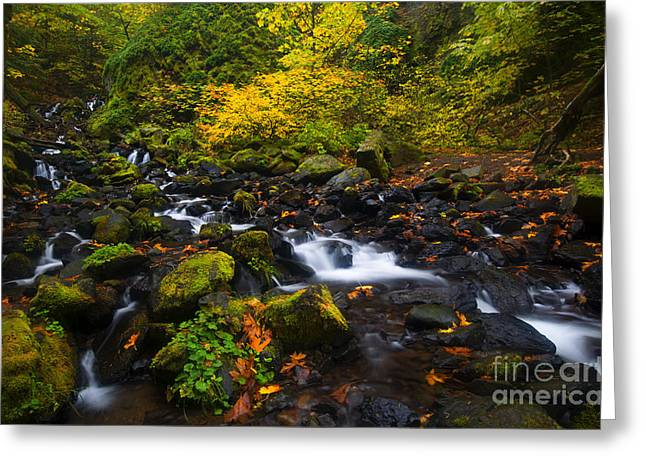 Surrounded By Autumn Greeting Card by Mike Dawson