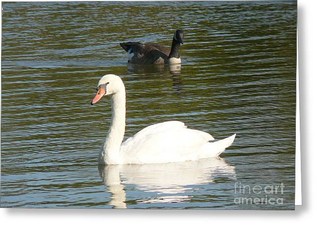 Greeting Card featuring the photograph Swan by Elizabeth Fontaine-Barr