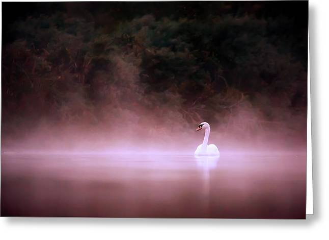 Swan In The Mist Greeting Card