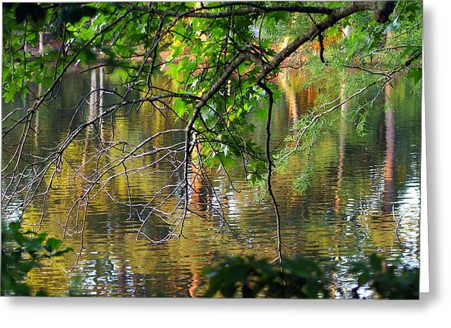 Swan Lake Greeting Card by Don Prioleau