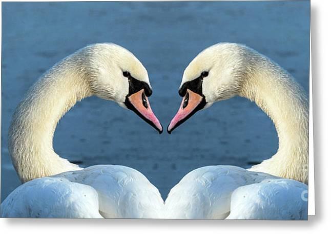 Swans Portrait Greeting Card