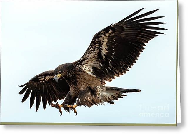 Talons First Greeting Card by Mike Dawson
