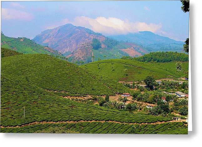 Tea Plantation Greeting Card by Art Spectrum