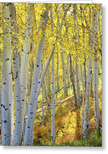 Greeting Card featuring the photograph Telluride Aspens by Ray Mathis