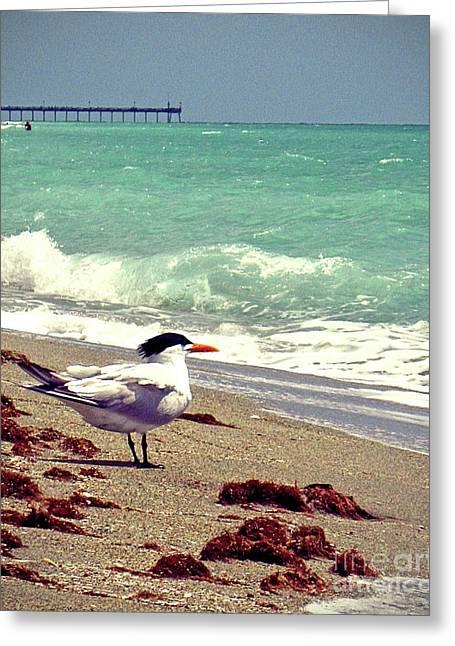 Terns On The Beach Greeting Card