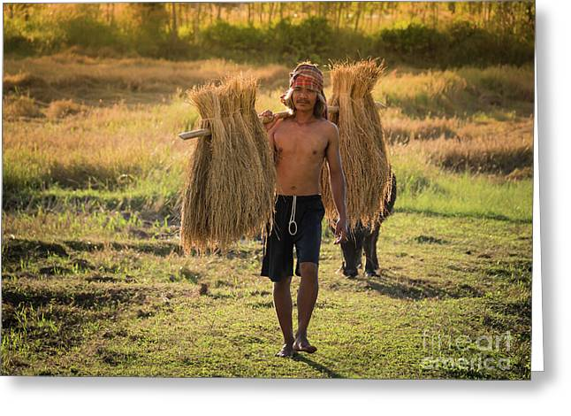 Greeting Card featuring the photograph Thai Farmer Carrying The Rice On Shoulder After Harvest. by Tosporn Preede