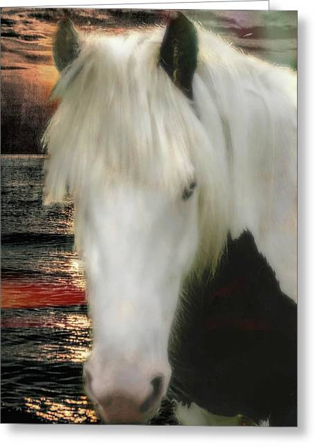 The Beautiful Face Of A Gypsy Vanner Horse Greeting Card