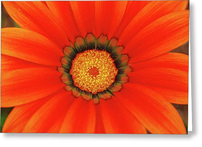 The Beauty Of Orange Greeting Card by Lori Tambakis