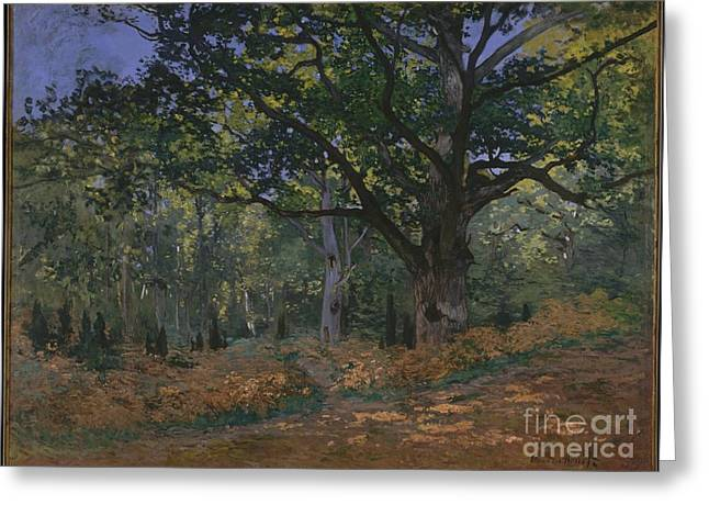 The Bodmer Oak, Fontainebleau Forest Greeting Card