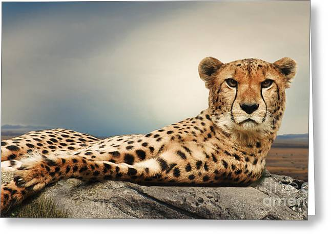 Greeting Card featuring the photograph The Cheetah by Christine Sponchia