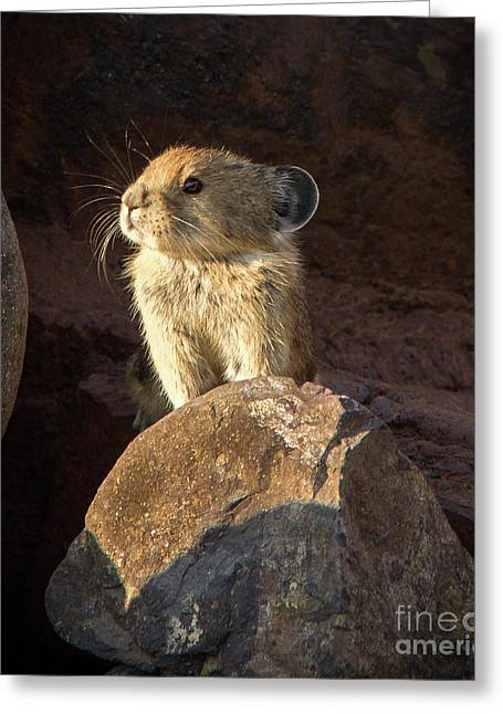 The Coast Is Clear Wildlife Photography By Kaylyn Franks Greeting Card