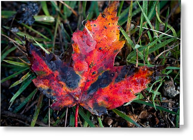 The Colors Of Autumn Greeting Card by David Patterson