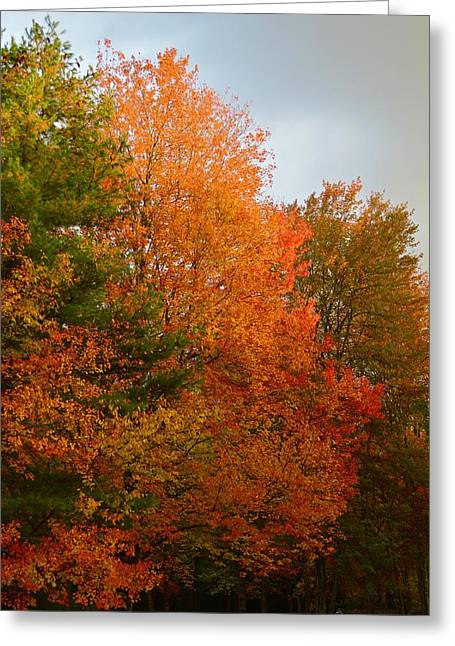 The Color's Of Fall Greeting Card
