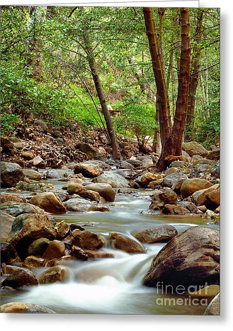 The Creek Greeting Card by Marc Bittan