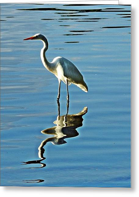 The Egret Greeting Card by Allen Beilschmidt