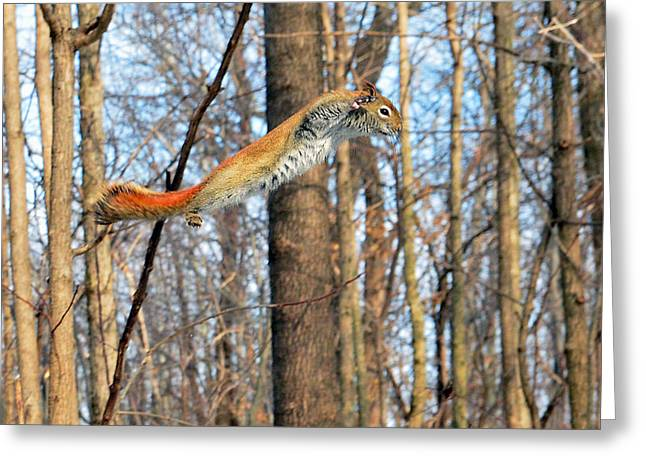 The Flying Squirrel Greeting Card