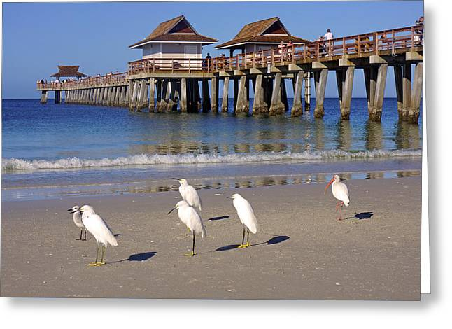The Historic Naples Pier Greeting Card by Robb Stan