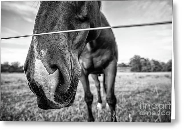 the Horses of Blue Ridge 4 Greeting Card