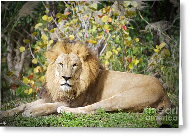 The Lion Pose Greeting Card