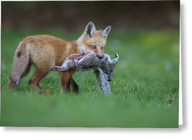 The Little Hunter Greeting Card by Mircea Costina Photography