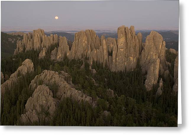 The Needles Protrude From Forests Greeting Card by Phil Schermeister
