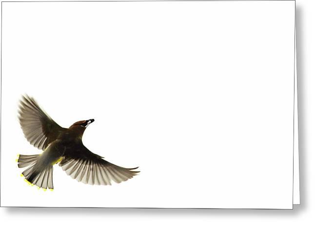 The Nesting Instinct Greeting Card by Andrea Kollo