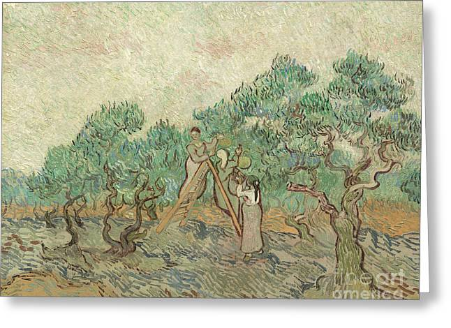 The Olive Orchard, 1889 Greeting Card
