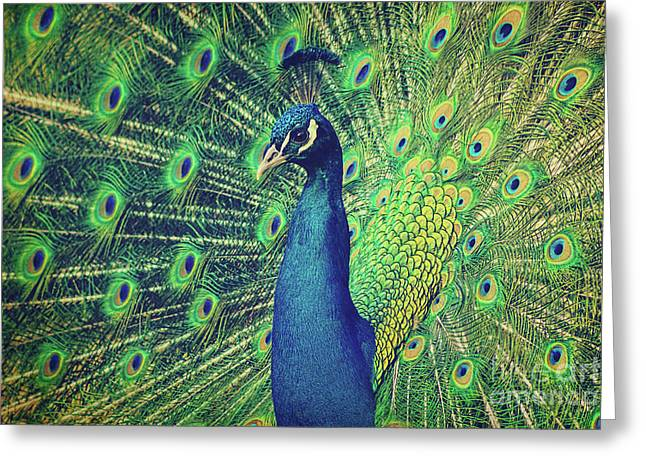 The Peacock Greeting Card by Angela Doelling AD DESIGN Photo and PhotoArt