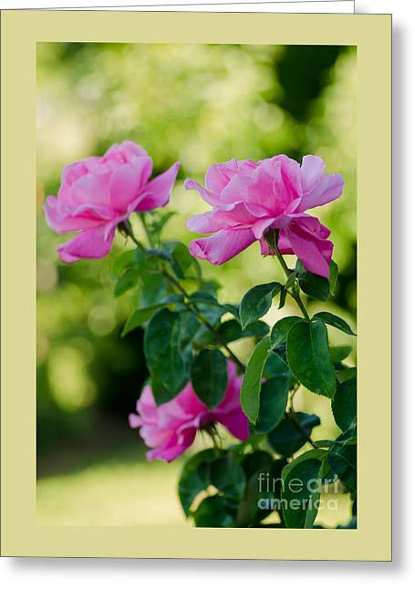 The Pink Ones Greeting Card by Nick  Boren